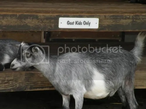 I wonder if goats can read.