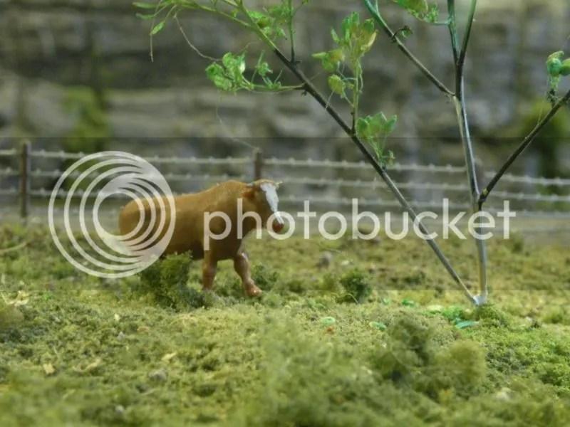 Languishing Livestock