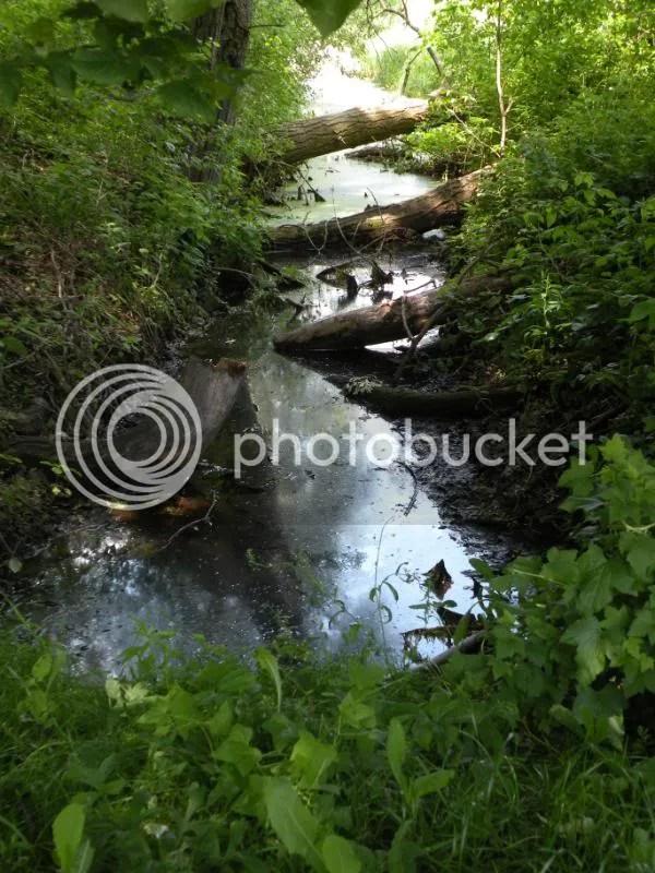a sliver of wetland wonderland