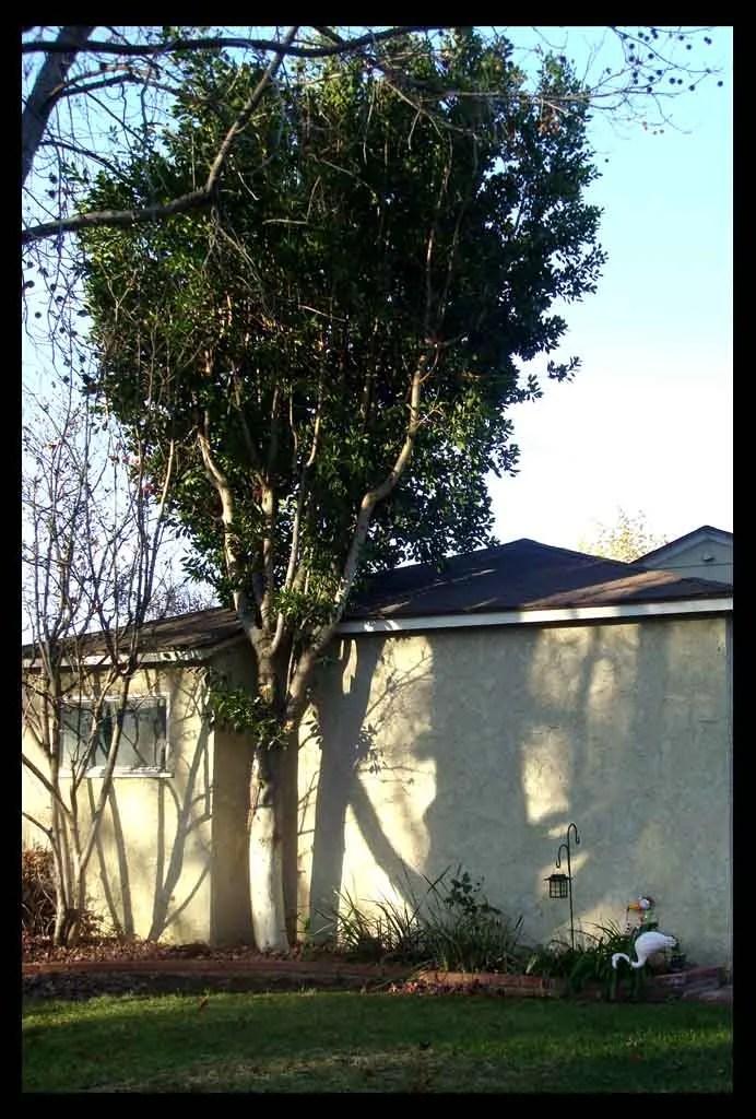 photo Tree_zps40da12de.jpg
