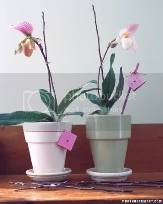 photo gt02febmsl_orchid_xl_zps3810e204.jpg