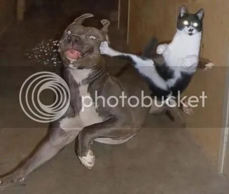 Gato Matrix