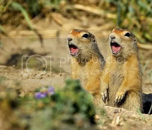 Singing is good for your health - singing squirrels