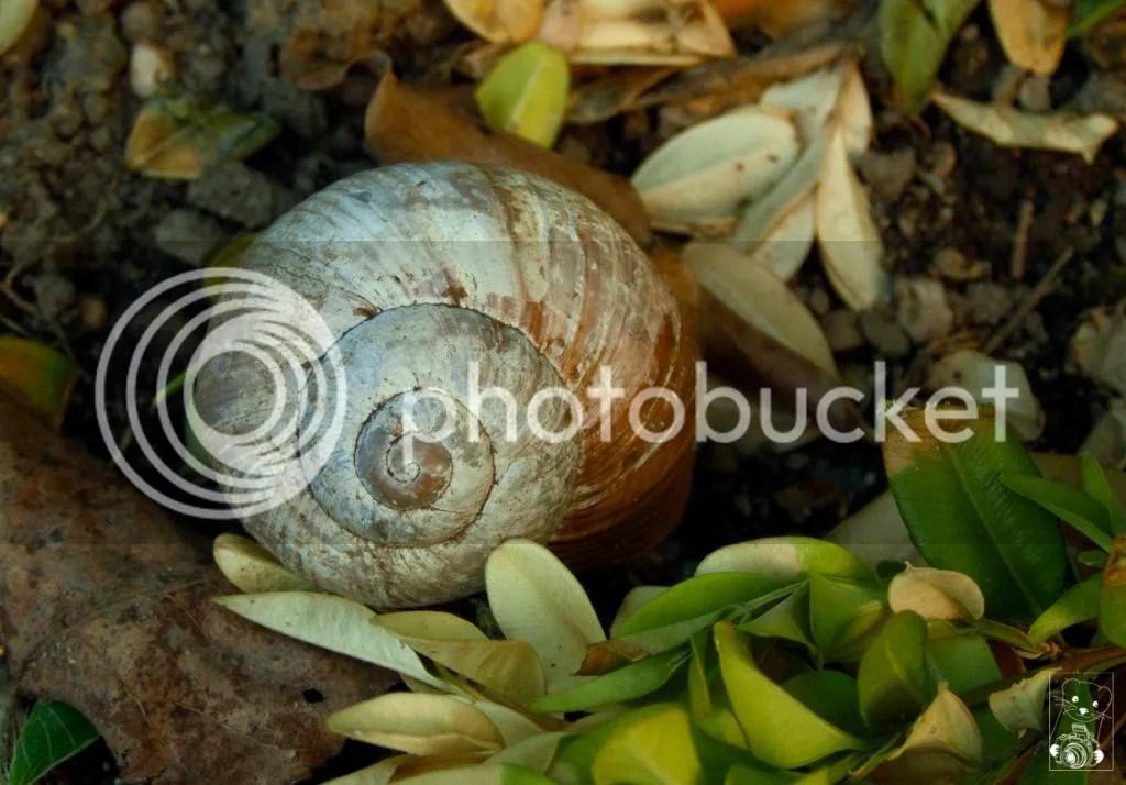 Snail in the Baroque Rosengarden in Tiefnau