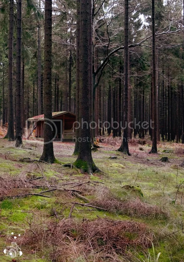 Wooden schack between pine trees in the forest in Tharandterwald in Saxony, Germany