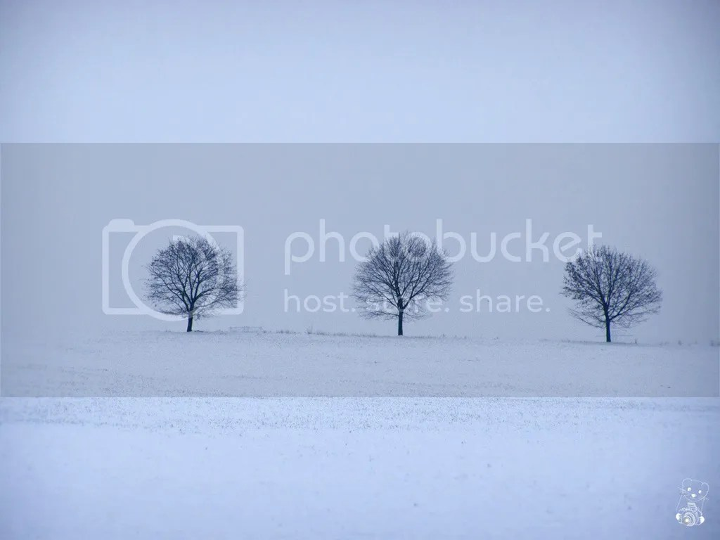 Trees in snow at Naunhof in Germany