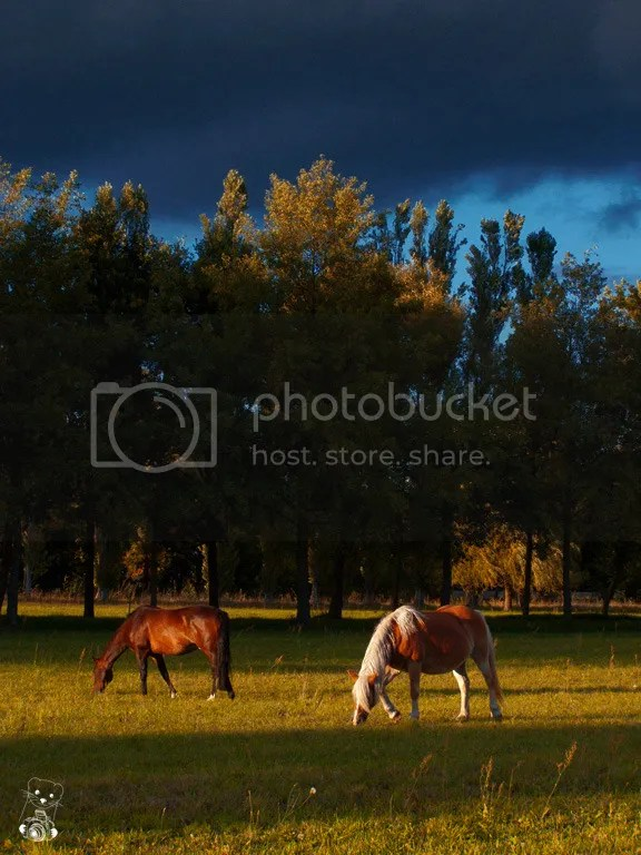 Two horses grasing after the storm in Neu Lübbenau, Germany