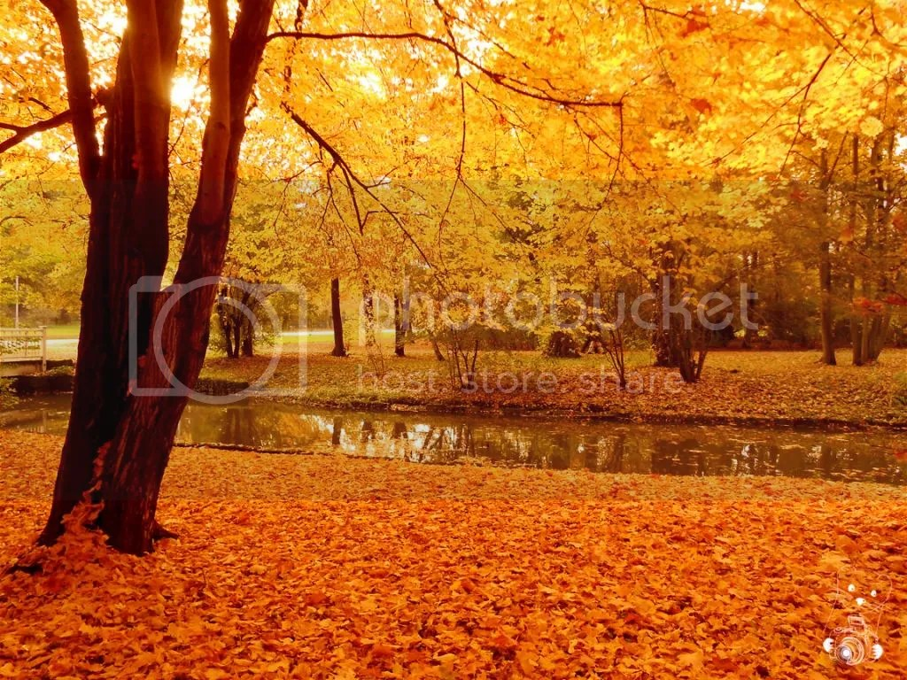 Golden Autumn in Großer Garten in Dresden, Germany
