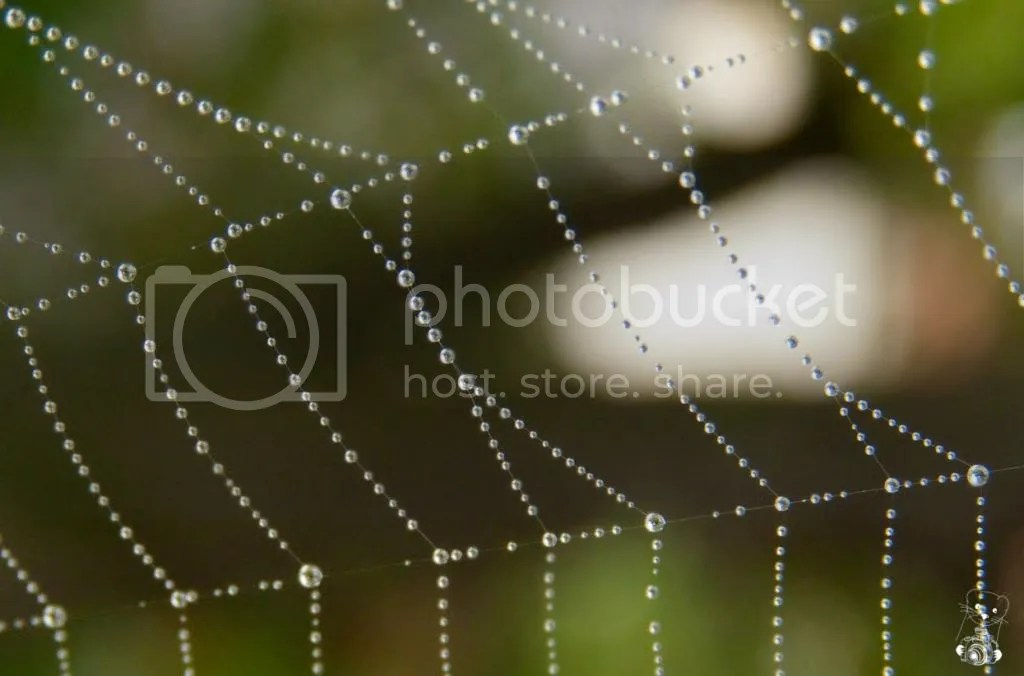 Raindrops caught on  a cobweb on the Weasel's balcony