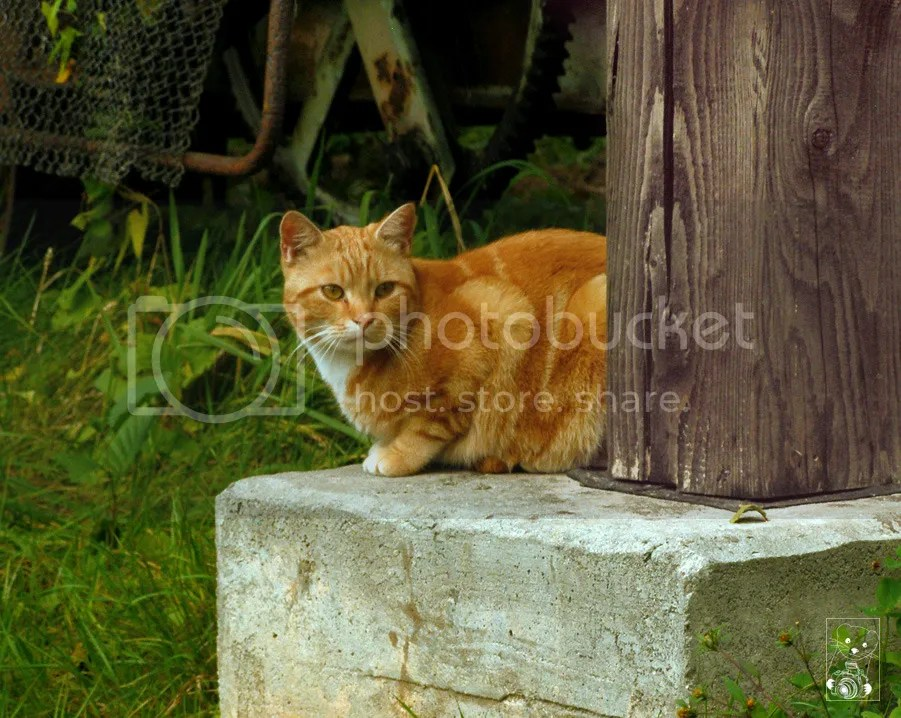 Cat sitting at the base of a wooden bridge over the river Spree in Lehde, in Germany