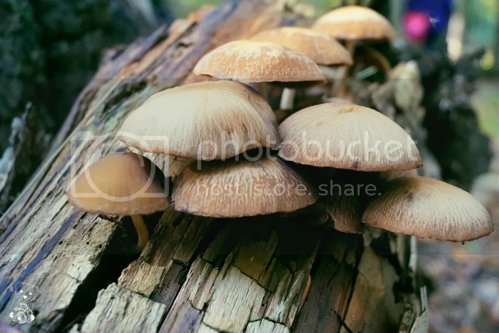 Mushrooms in the Laußnitzer Heide in Saxony, Germany