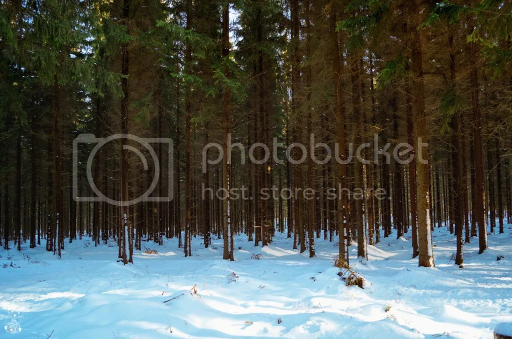 Trees in the forest of Tharandterwald in Saxony, Germany
