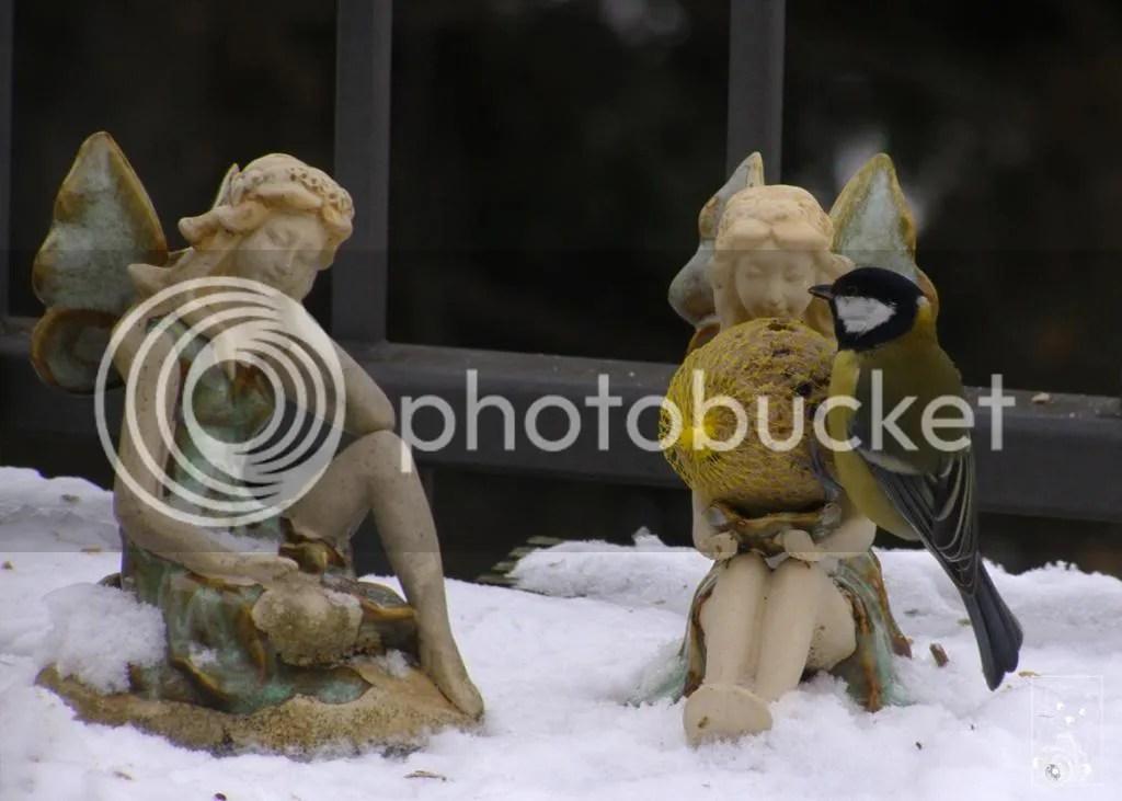 Fairies Tit Bird Germany December 2012