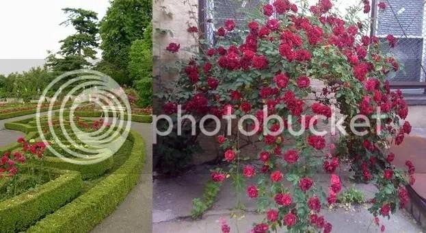 Rose Garden Ideas Pictures Inspiration Interior Designs