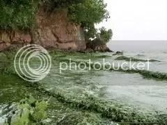 Polluted Taihu Lake, 5