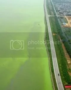 Polluted Taihu Lake, 7