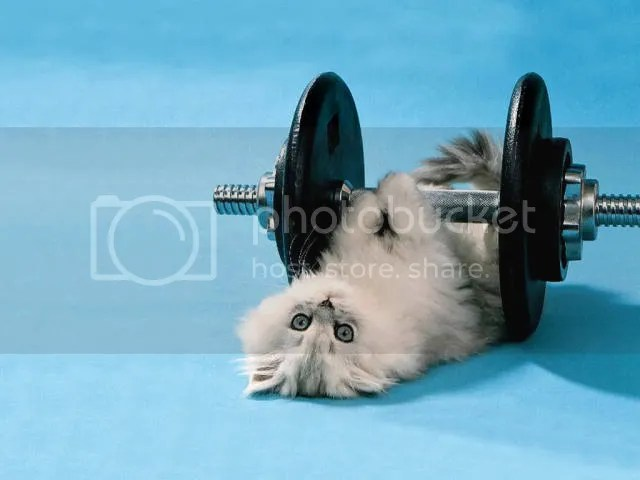 Working out kitty