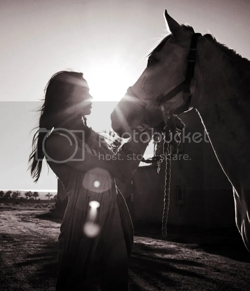 afternoon light,horses