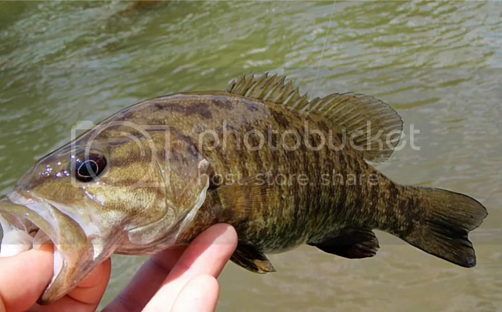 Smallies036.jpg picture by Bentrod2010