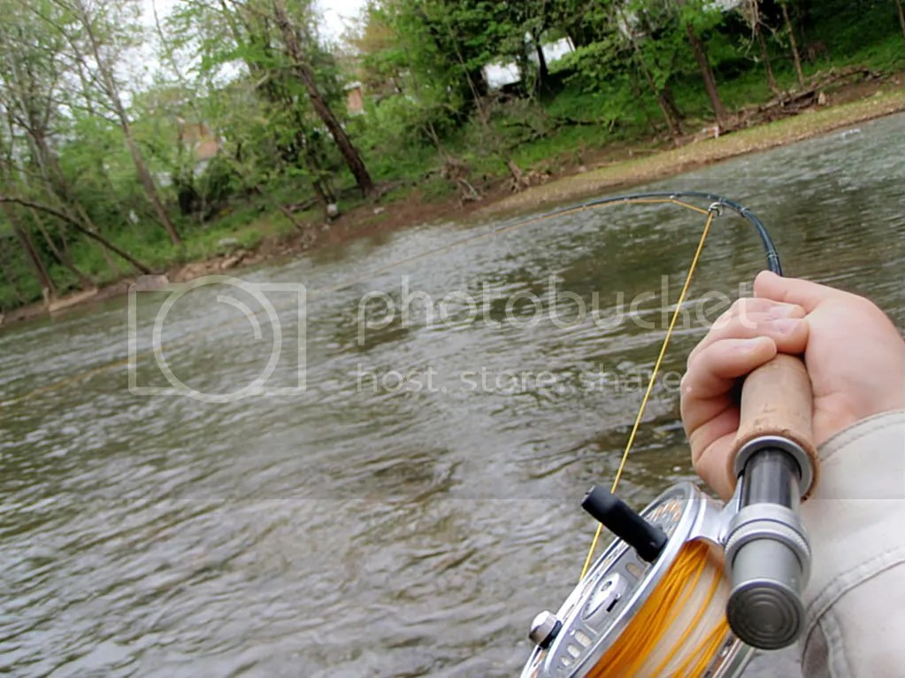 carp044.jpg picture by Bentrod2010