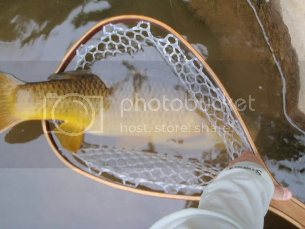 carp049.jpg picture by Bentrod2010