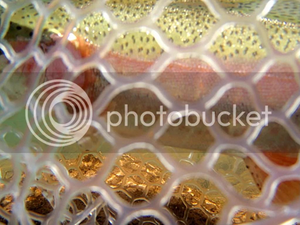 elkriver2010016.jpg picture by Bentrod2010