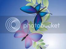 Butterflies Photo by dens_01   Photobucket