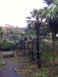 Alum Chine Tropical Gardens - Bournemouth - Hardy Tropicals UK
