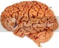 Otak Anda