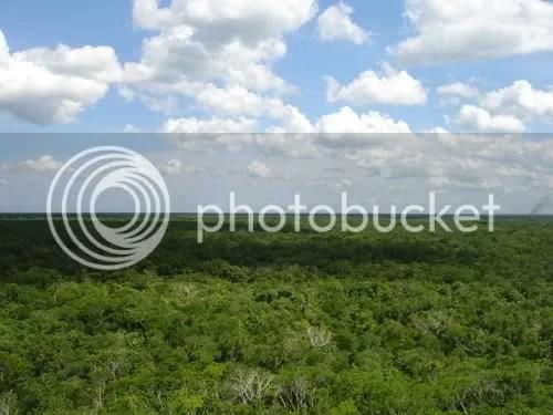 Uitzicht vanop de piramide van Cobá