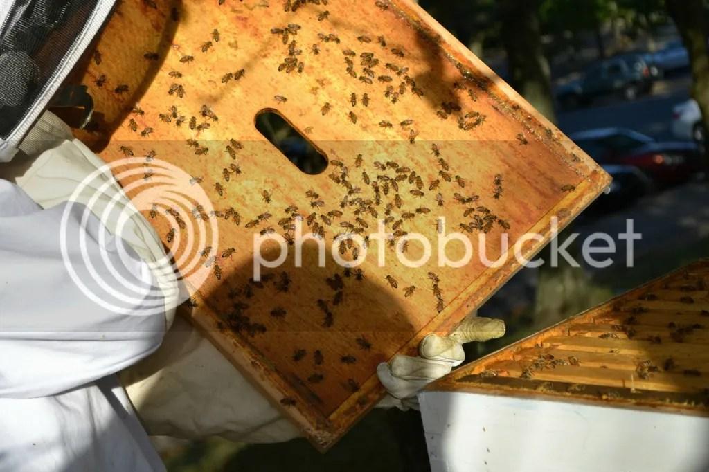 photo Bees14_zpstijoq2nb.jpg