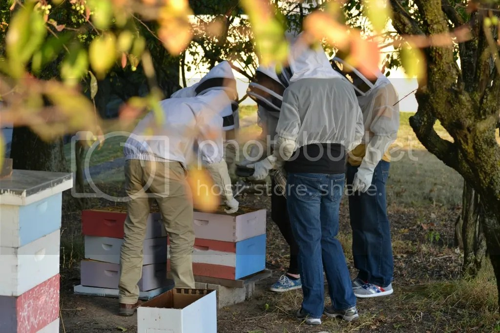 photo Bees5_zpstguspw5h.jpg