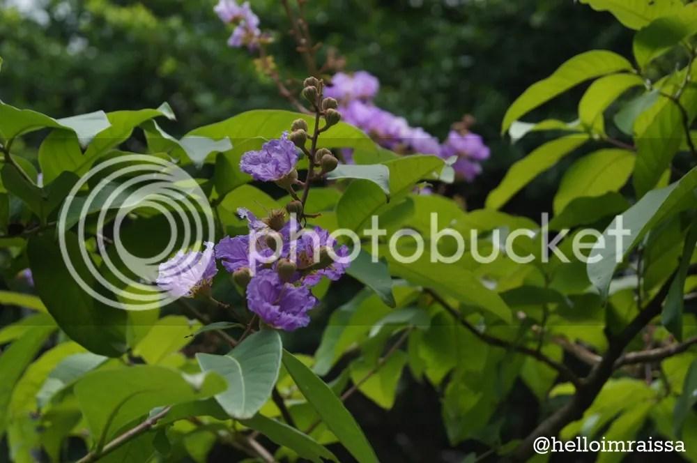 photo c9a09267-5b4f-494d-82be-ba595516a97f_zps49493e12.jpg