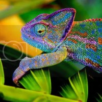 Real Chameleon Color Change