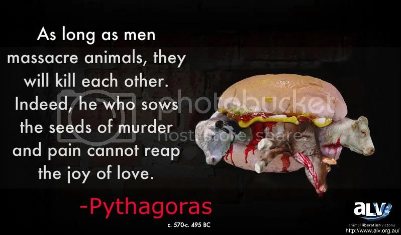 on a ALV background cows in a burger, added quote by Pythagoras