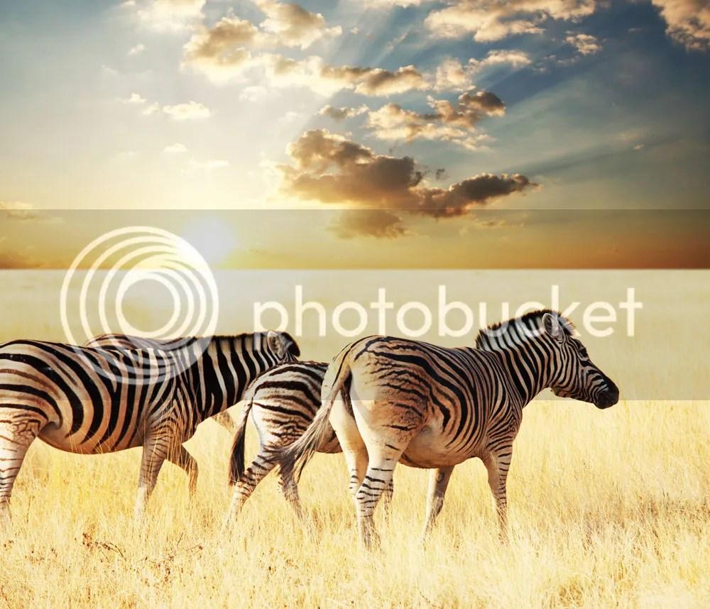 luxury safari resorts kenya