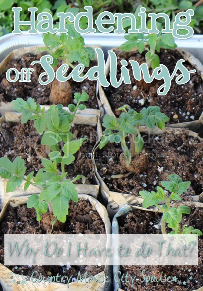 Country Mouse City Spouse: Hardening Off Seedlings- Why Do I Have to Do That?