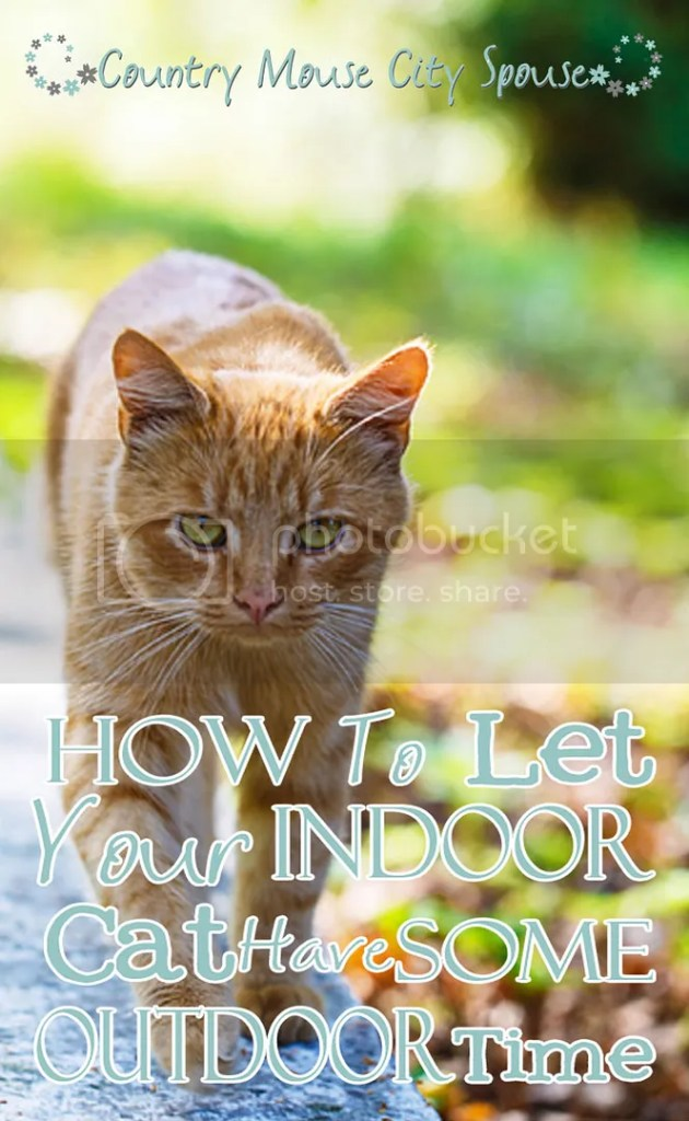 How to Let Your Indoor Cat Have Some Outdoor Time- Country Mouse City Spouse