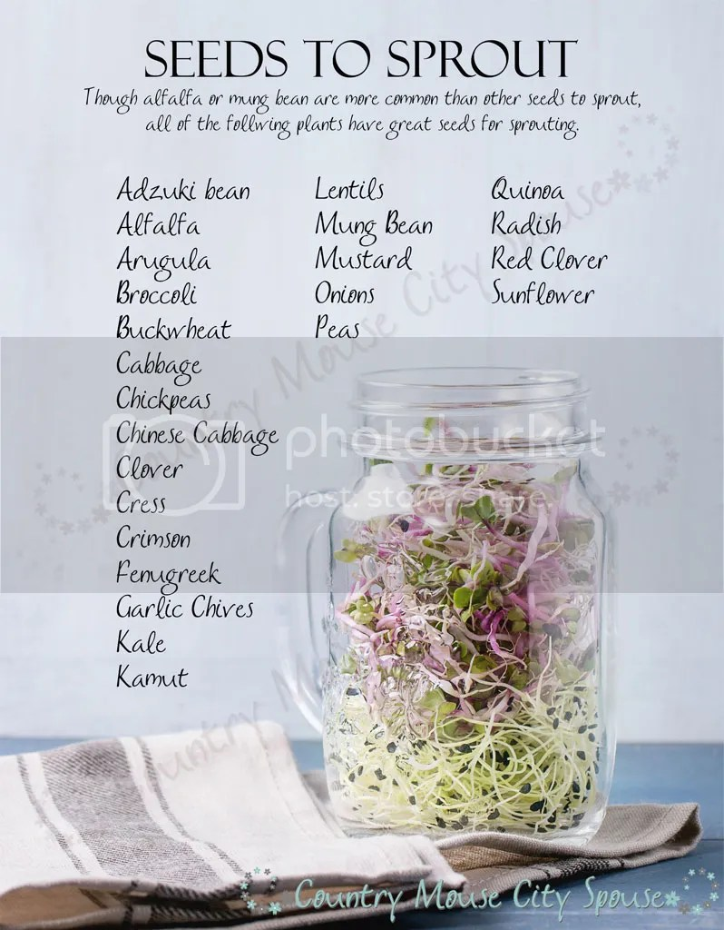 Sprouting a Winter Garden: How to Sprout Seeds at Home- Country Mouse City Spouse Nutritious, tasty sprouts are perfect for indoor winter gardening. In just a few days you can turn seeds into fresh vegetables. | Gardening | Kitchen | Self-Sufficient | Homemaking | Home Economics |