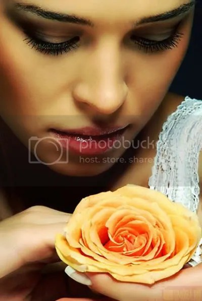 rose Pictures, Images and Photos