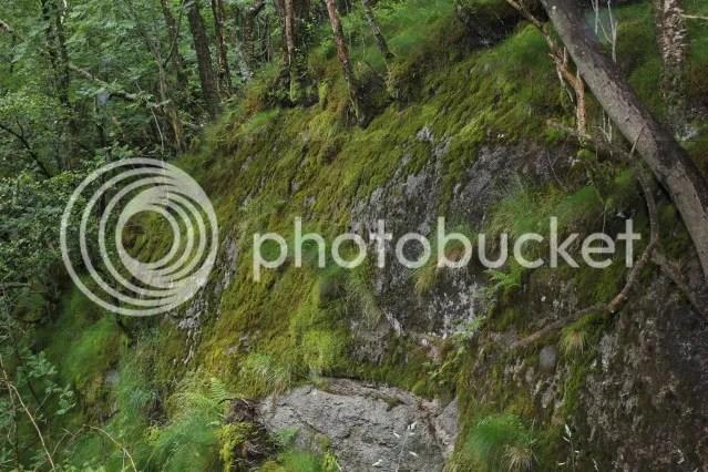 vakker mose gress