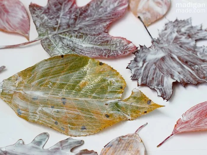How to Preserve Fall Leaves , Rosyscription
