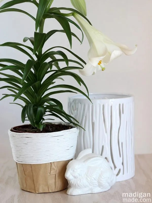 Simple gift idea: rope covered potted lily plant