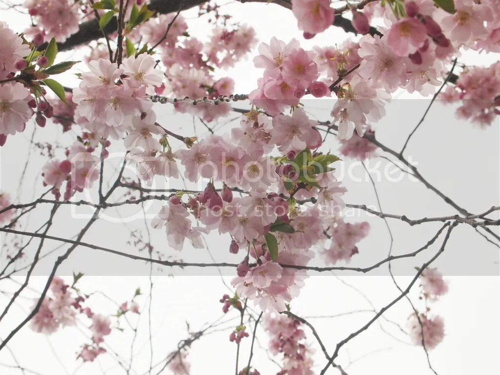 photo 2015-04-16 02.41.47 1_zpsmfnw7jdt.jpg