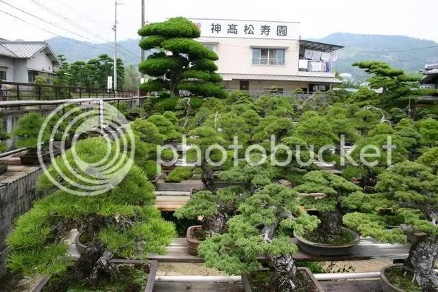 Kinashi Nursery 7