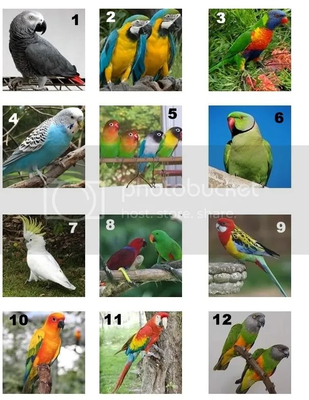 number venn diagram sorting numbers f150 starter wiring name the variety of parrot (pics) quiz - by crafty_quilter