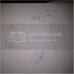 Anatomy Practice: Hands