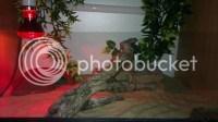 new leopard gecko set up - Reptile Forums