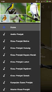 Suara Prenjak Lumut Master : suara, prenjak, lumut, master, Download, Kicau, Burung, Prenjak, Lumut, Gacor, DownloadAPK.net