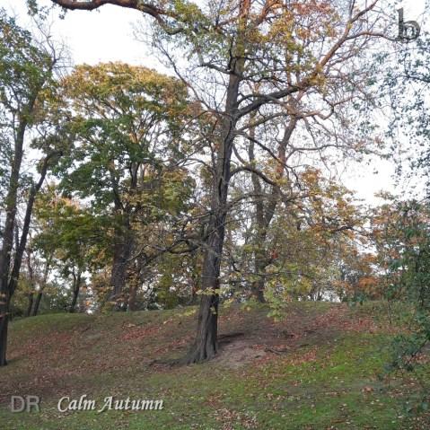 DR – Calm Autumn